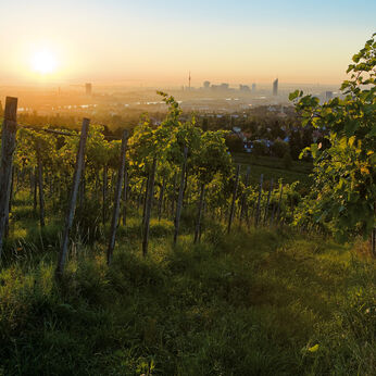 Vienna: the wine-growing capital of the world