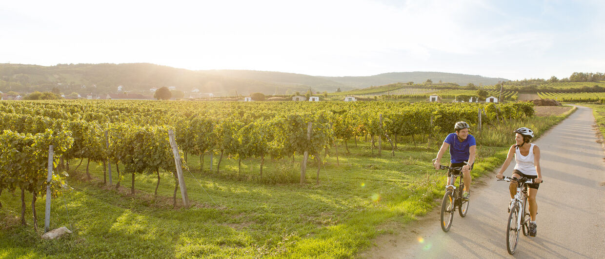 Cycling through the vineyards of Lower Austria